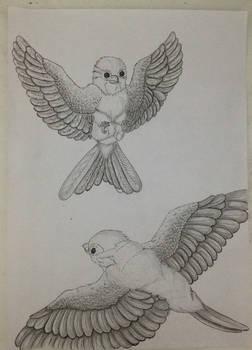 Bird anatomy study