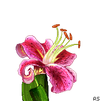 Pixel Pink Lily by Reverrii