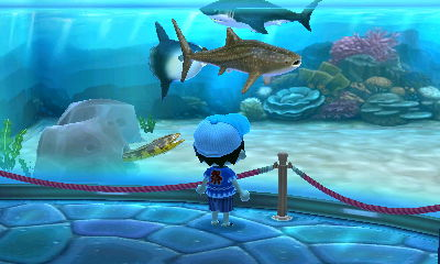 ACNL - Me as a boy watch the sharks in Aquarium by Magic-Kristina-KW