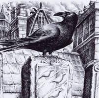 Ravens Of Black Mountain by Black--Mountain