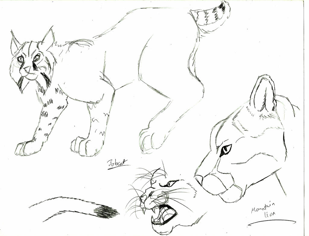 coloring pages mountain lion - photo #17