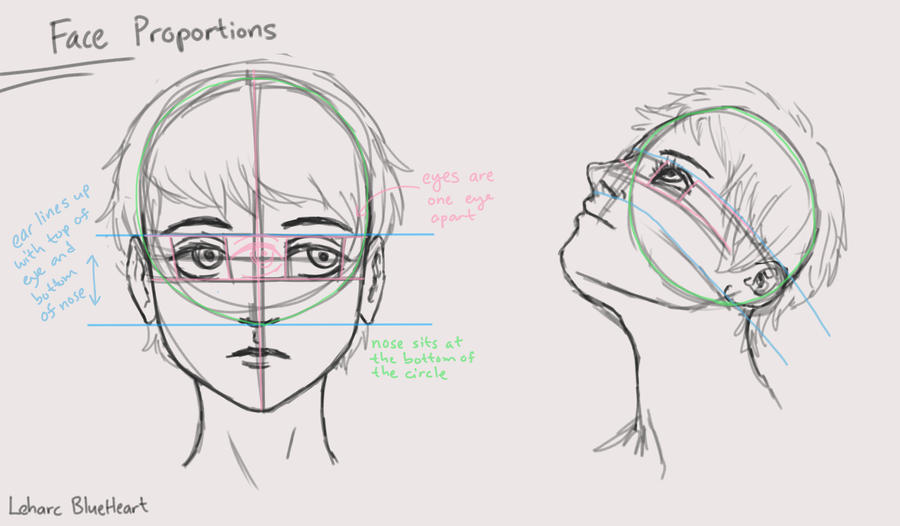 Face Proportions Diagram By Leharc Blueheart On Deviantart