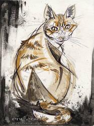 Project Charity Cats: Predator