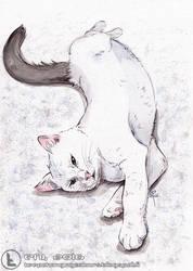 Project Charity Cats: Yuki