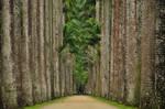 Rio de Janeiro Botanical Garde