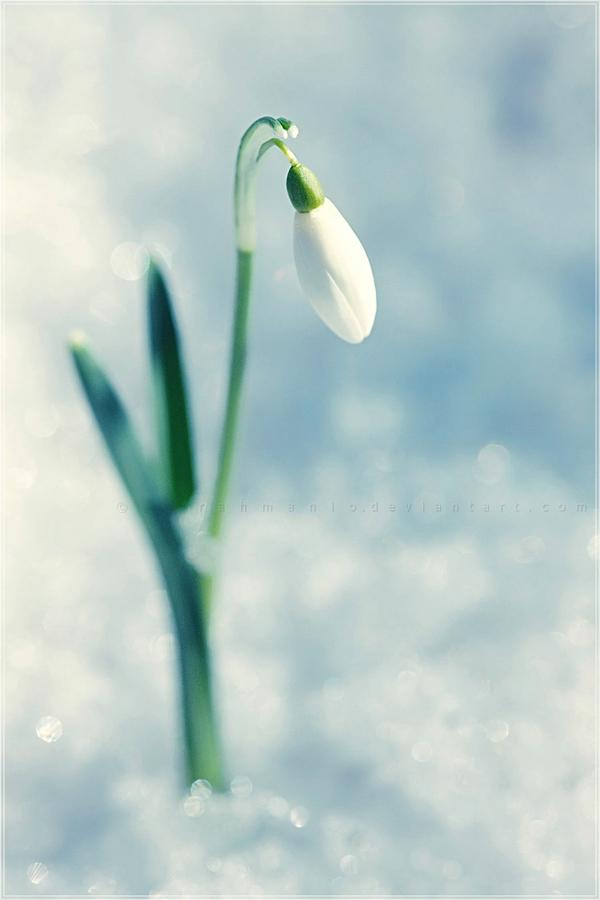 spring... by rahmanio