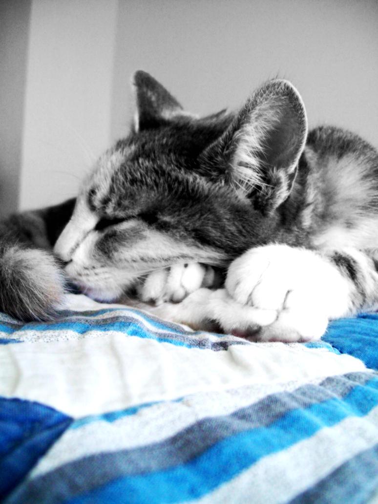 Sleeping by kamkam1115