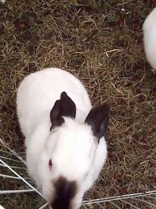 Sasukebunny10955's Profile Picture