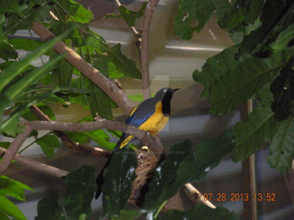 Singing bird by FallenNekoChild