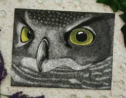 Owl Eyes by SydVC