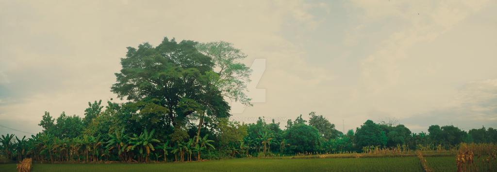 Wetan Omah by Zucko007