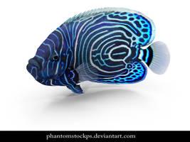 Blue Fish by phantomstockps