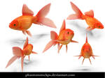 orange Fish by phantomstockps