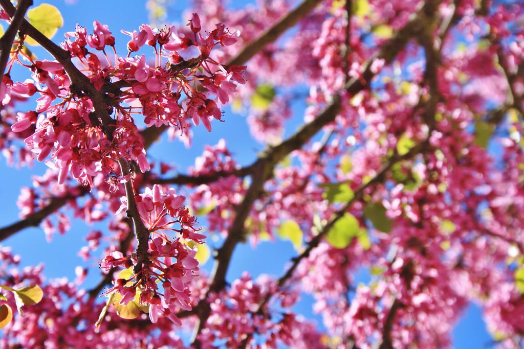 Pink Flowers by sacadura