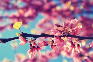 Pink Flowers III by sacadura