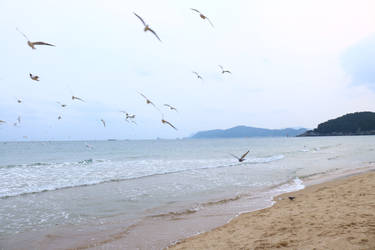 Haeundae Beach by sacadura