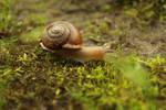 Little Snail 1