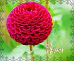 Pink Flower Edit