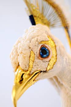 Leucistic Peacock head detail