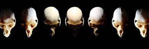 Monkey skull phases