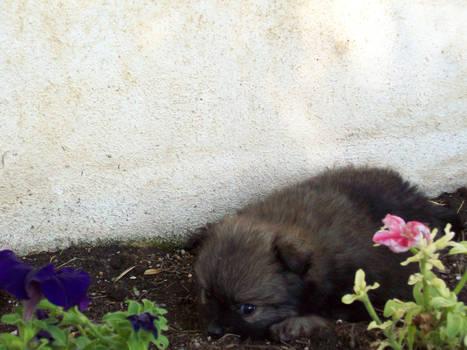 Camouflage Puppy