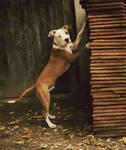 Pin-up Pup