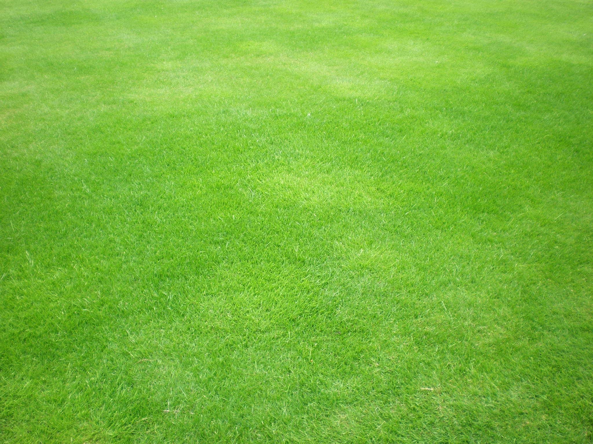 Textured wallpaper 2017 grasscloth wallpaper - Grass Texture By Jnetlakni Resources Stock Images Textures Other 2011