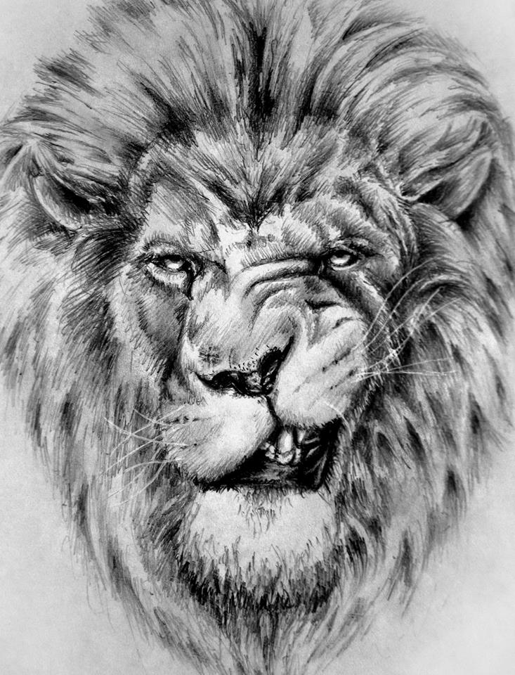Lion sketch by ShizZuro on DeviantArt