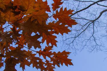 Autumn by CrawlingGirl