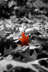 Last Leaf by CrawlingGirl