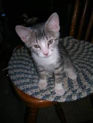 Kitten-Pixie