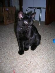Kitten-Orion