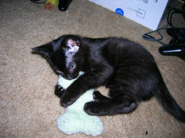 Kitten-Athena