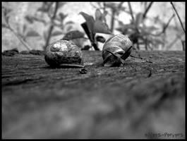 snail one snail day always ? by effets-pervers