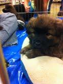 Puppy by kawaiilover7682