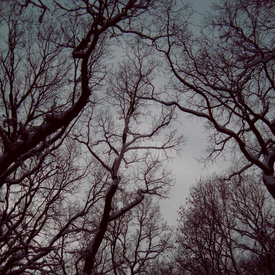 Heart Forest by Dj-Hayabusa