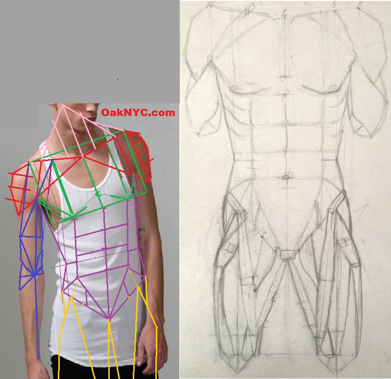 Skinny Male Anatomy Study by Grey-Spark on DeviantArt
