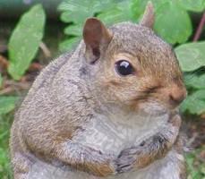 Squirrel Cuteness