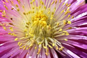 Heart of the Flower 2