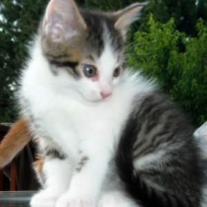 RockBabi's Profile Picture