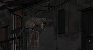 Ratten1