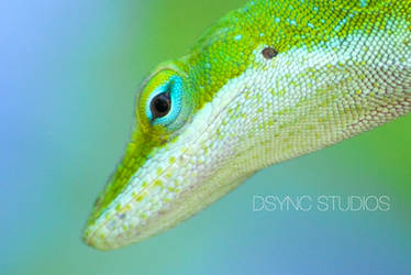Hey There, Blue Eyes by DsyncStudios