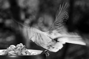 Takeoff by Austinii