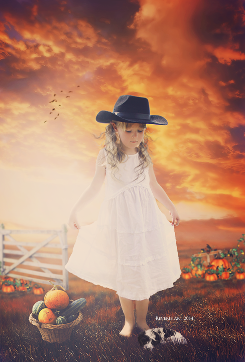 Country pumpkin by Reverie-digitalart