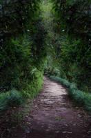 Dark Path 1 by Jeni-Sue