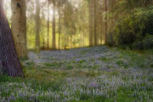 Premade Meadow by Jeni-Sue