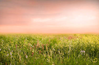 Spring Field Background by Jeni-Sue