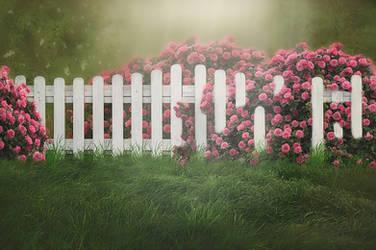 Rose Fence Background by Jeni-Sue