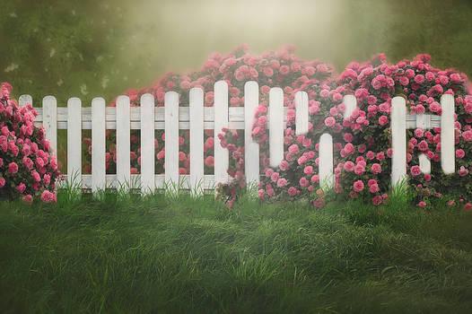 Rose Fence Background