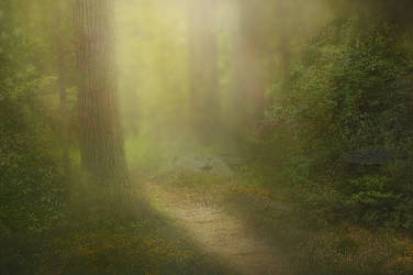 Forest Path by Jeni-Sue
